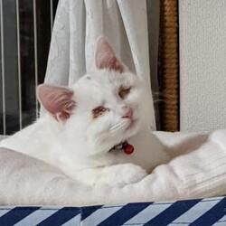 1/10(日)根本ダンススタジオ保護猫譲渡会 サムネイル3