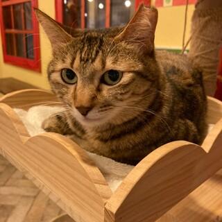 猫好きの控えめなキジトラ『チル』