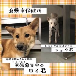 12/23最終お問い合わせ期限・・→全頭譲渡決定!