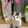 牛柄♡可愛い子猫