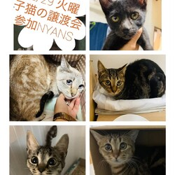 福岡nyans12/29子猫の譲渡会