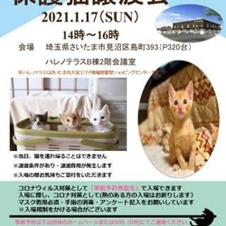【予約優先】1/17(日)ハレノテラス保護猫譲渡会