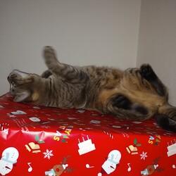 メリークリスマス・イブ♬