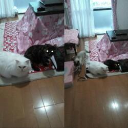 猫2匹と外猫ちゃんが老猫です。