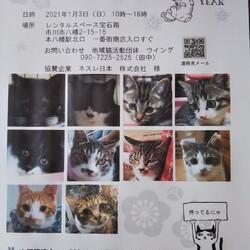 1/3市川市地域猫活動団体ウイング譲渡会開催