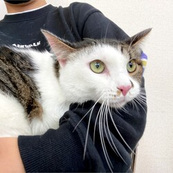 ▼猫の譲渡会▼名古屋市港区 サムネイル2