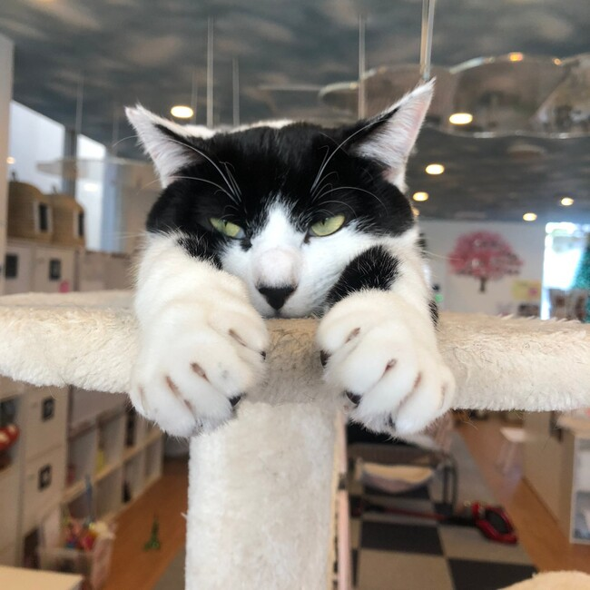 保護猫カフェさくらのカバー写真