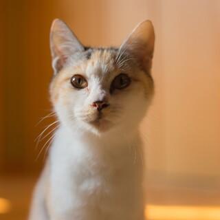 べったり甘えたちゃん 雑種猫♀ ミリ