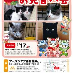 完全予約制、新春保護猫たちのお見合い会