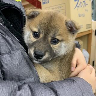 12月27日購入の子犬です。