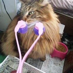 これやったら小顔になるの?猫用マッサージローラー