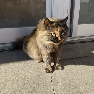 大人しいサビ猫ちゃん
