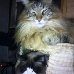 寒波襲来の明け方に/猫カフェ多頭崩壊SOS