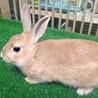 あいみちゃん~あまえたの子ウサギ~ サムネイル2
