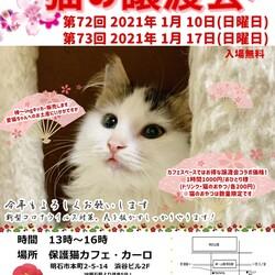 新春!明石【猫の譲渡会】猫まみれwithカーロ 第73回