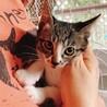 大人猫大好きなキジ白 「モチ」 サムネイル7