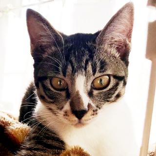 大人猫大好きなキジ白 「モチ」