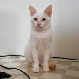 可愛い子猫ちゃんの里親さん募集中