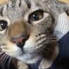 人懐っこい可愛い兄妹猫 不妊手術済み サムネイル7