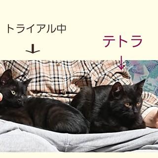 人懐こい黒猫の「テトラ」くん