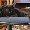 人懐こい黒猫の「テトラ」くん サムネイル2