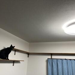 てっちゃん、蜘蛛が〜
