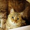 多頭で遺棄されたキジ猫さん3