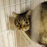 多頭で遺棄されたキジ猫さん2