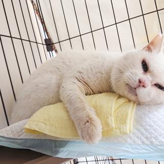 都市伝説ともなった、ありがたい白ネコちゃん