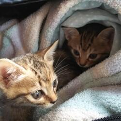 2/21(日) 地域猫活動団体ウイング譲渡会開催