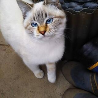 青い目の優しい女の子