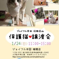保護猫❤️譲渡会 in ジョイフル本田瑞穂店