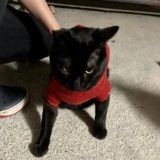 お膝大好き♡黒猫のブラックくん