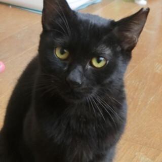 7か月くらい、とっても美人な黒猫ちゃん♪