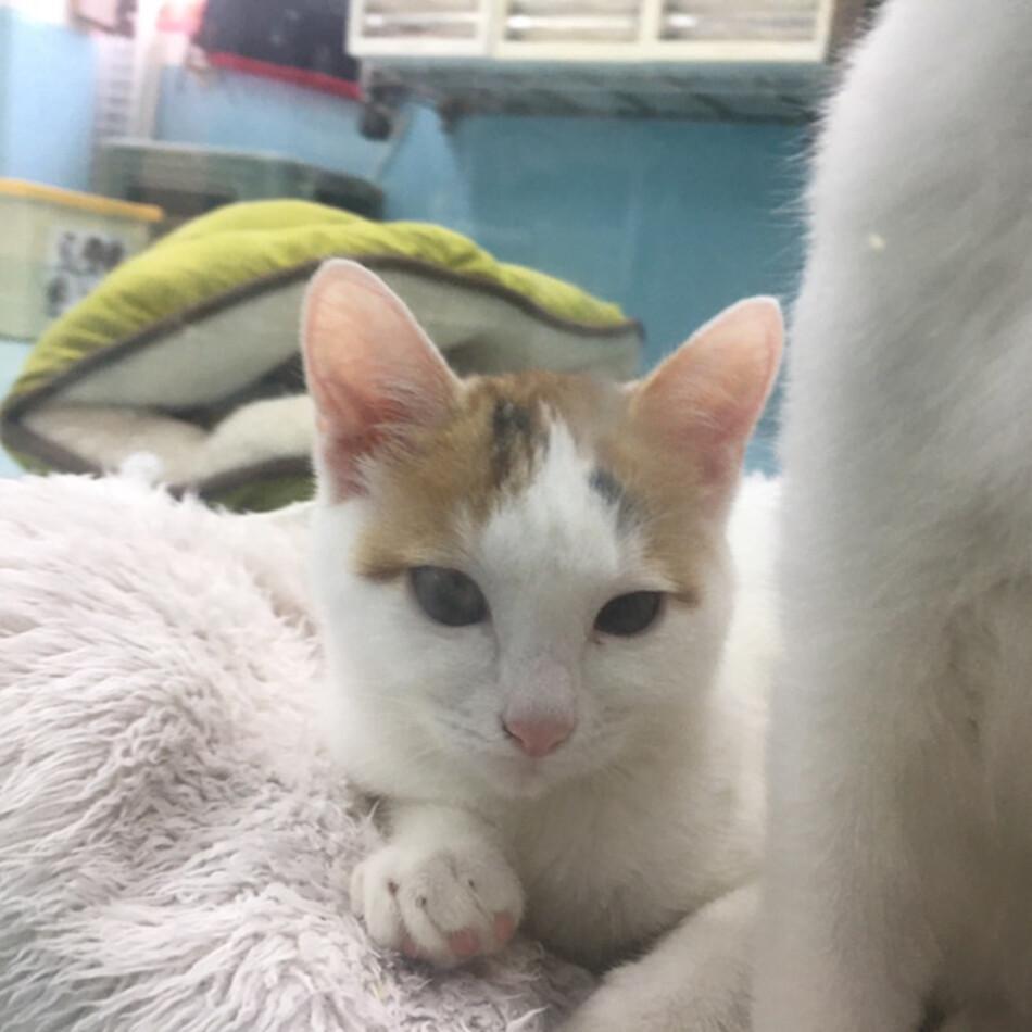神の島子猫 クーデリアのカバー写真