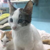 神の島子猫 三日月ミーちゃん