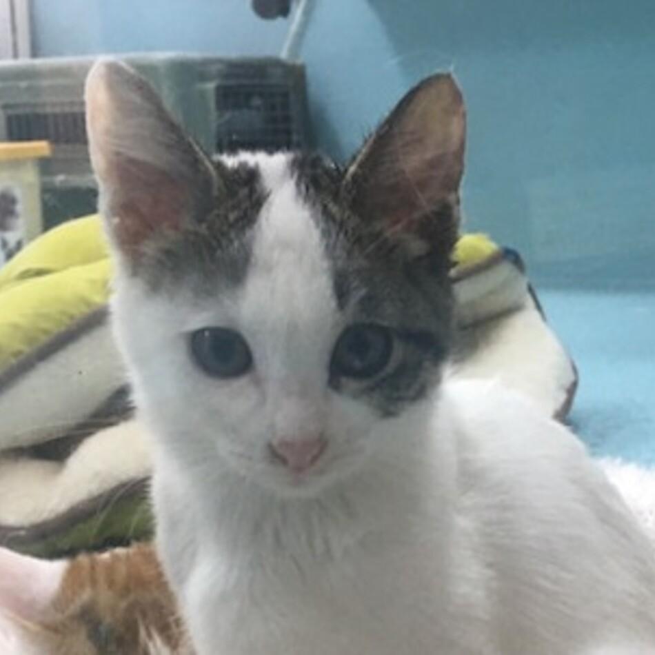 神の島子猫 三日月ミーちゃんのカバー写真