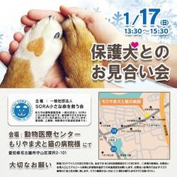 名古屋市守山区:保護犬のお見合い会