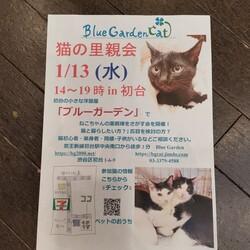 渋谷区初台で里親会