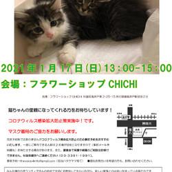 中止! 猫の譲渡会 in 高井戸CHICHI