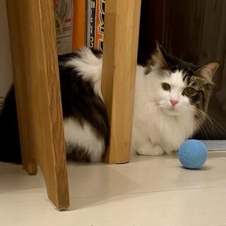 【1/16芝浦】長毛ワガママ猫の経験者求む!