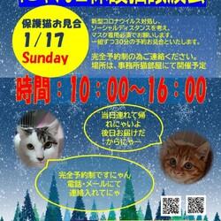 保護ねこ譲渡会@プチシェルター猫部屋