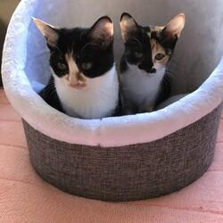保護ねこ譲渡会@プチシェルター猫部屋 サムネイル2