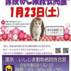 保護ねこ譲渡会@いしじま動物病院待合室