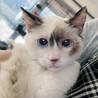 さいたま市 新都心東広場(コクーン側)「保護ネコ・犬譲渡会」13時30分~開催