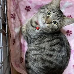 保護子猫が人馴れして可愛さ倍増です!
