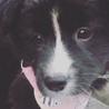 諫早市の野良犬が産んだ仔犬モフモフ