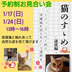 猫のすすめ ~譲渡編~ お見合い会