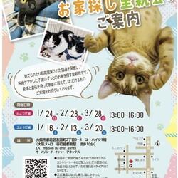 メールでご予約『保護猫のずっとのお家探し里親会』日曜日編。