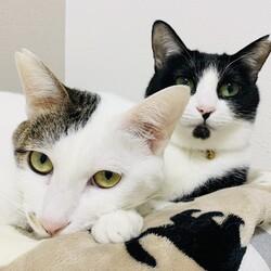 ご予約制『保護猫のずっとのお家探し里親会』土曜日編。 サムネイル3